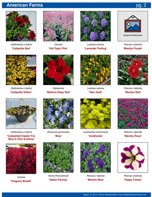 One of the page styles has 16 plants per page with only a picture and the plant name.