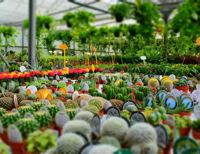 Websites for Garden Centers