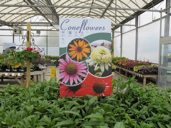This Coneflowers coroplast poster uses the custom template we designed for Garden Crossings.